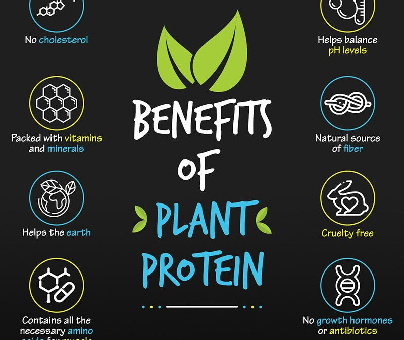 Benefits of Plant Protein