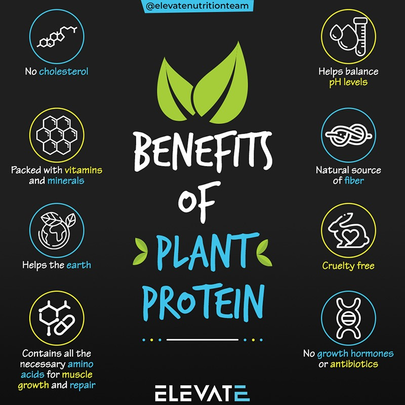 Benefits of Plant Protein Elevate Nutrition
